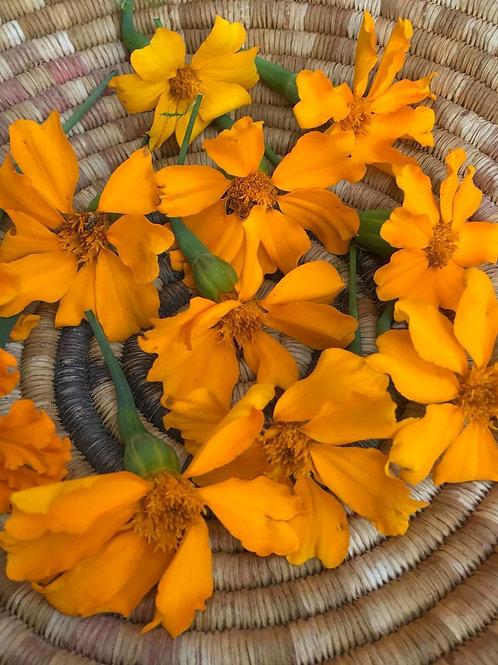 Cempasuchil (Flor de Muerto) Marigold Flower