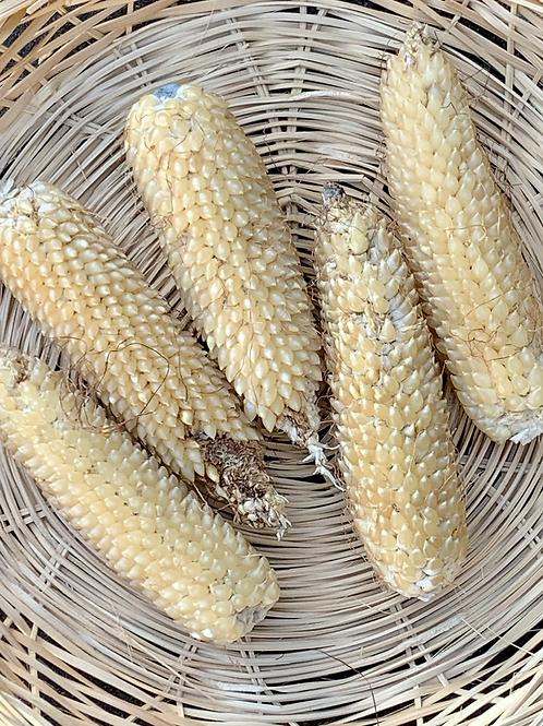 Burro Mountain White Popcorn