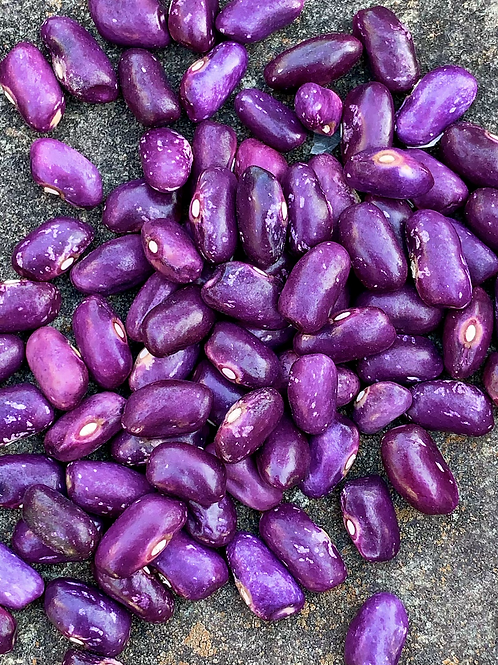 Prince Purple Bush bean
