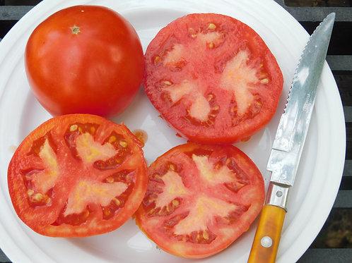 Maule's Success Tomato