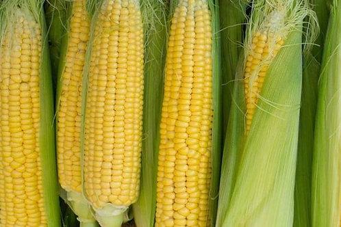 Golden Bantam Sweet Corn