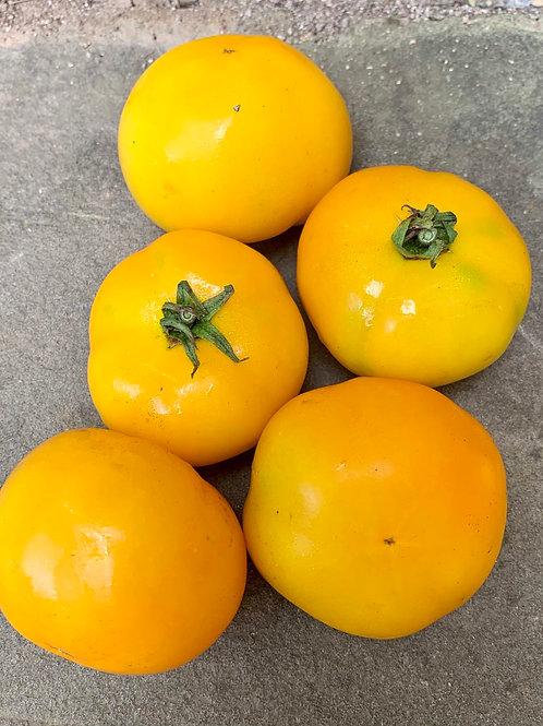 Golden Juniata Tomato