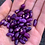 Thumbnail: Prince Purple Bush bean