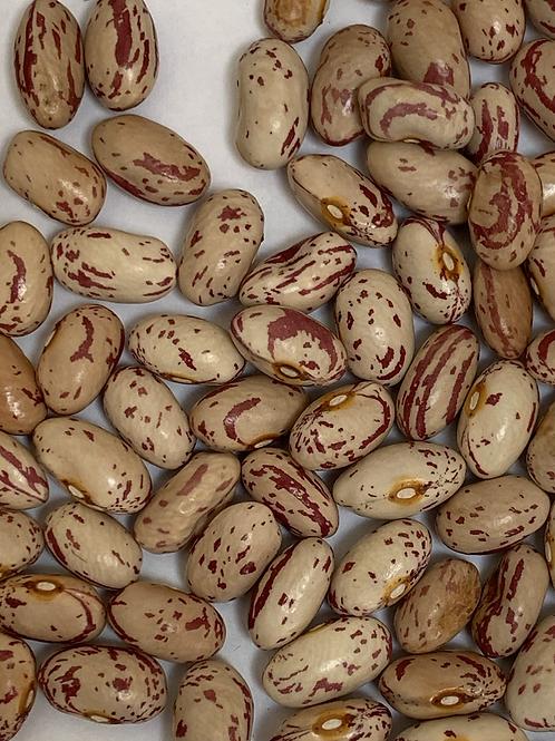 Cattaraugus Cranberry Bean