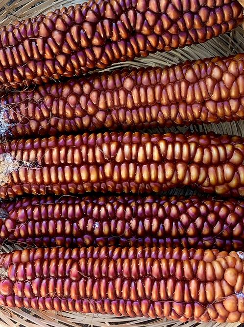 King Philip Flint Corn
