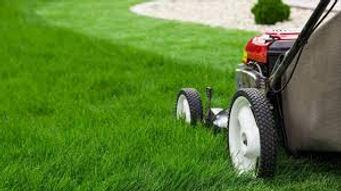 cut grass.jpg