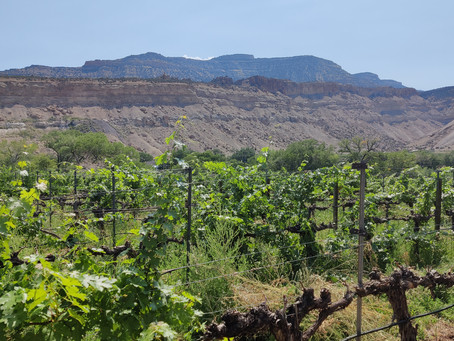 The Challenges of Grape-Growing in the Grand Valley and the Resiliency of Local Wineries