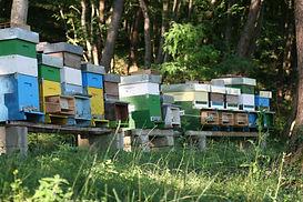 le api di laura 2.jpg