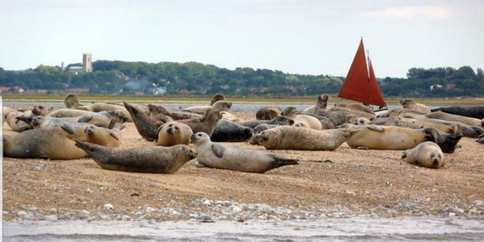Norfolk Seals by boat and Blakeney Eye - TRAVEL INCLUDED