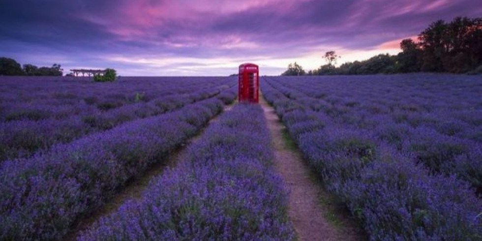 Spectacular Lavender in the Cotswolds! Plus Chipping Campden and Broadway hike