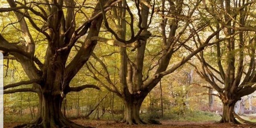 Visit the enchanted forest of Ashridge Estate - gorgeous day hike