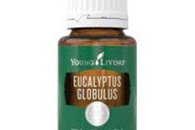 Eucalyptus globulus 15 ml