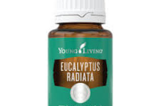 Eucalyptus Radiata 15 ml