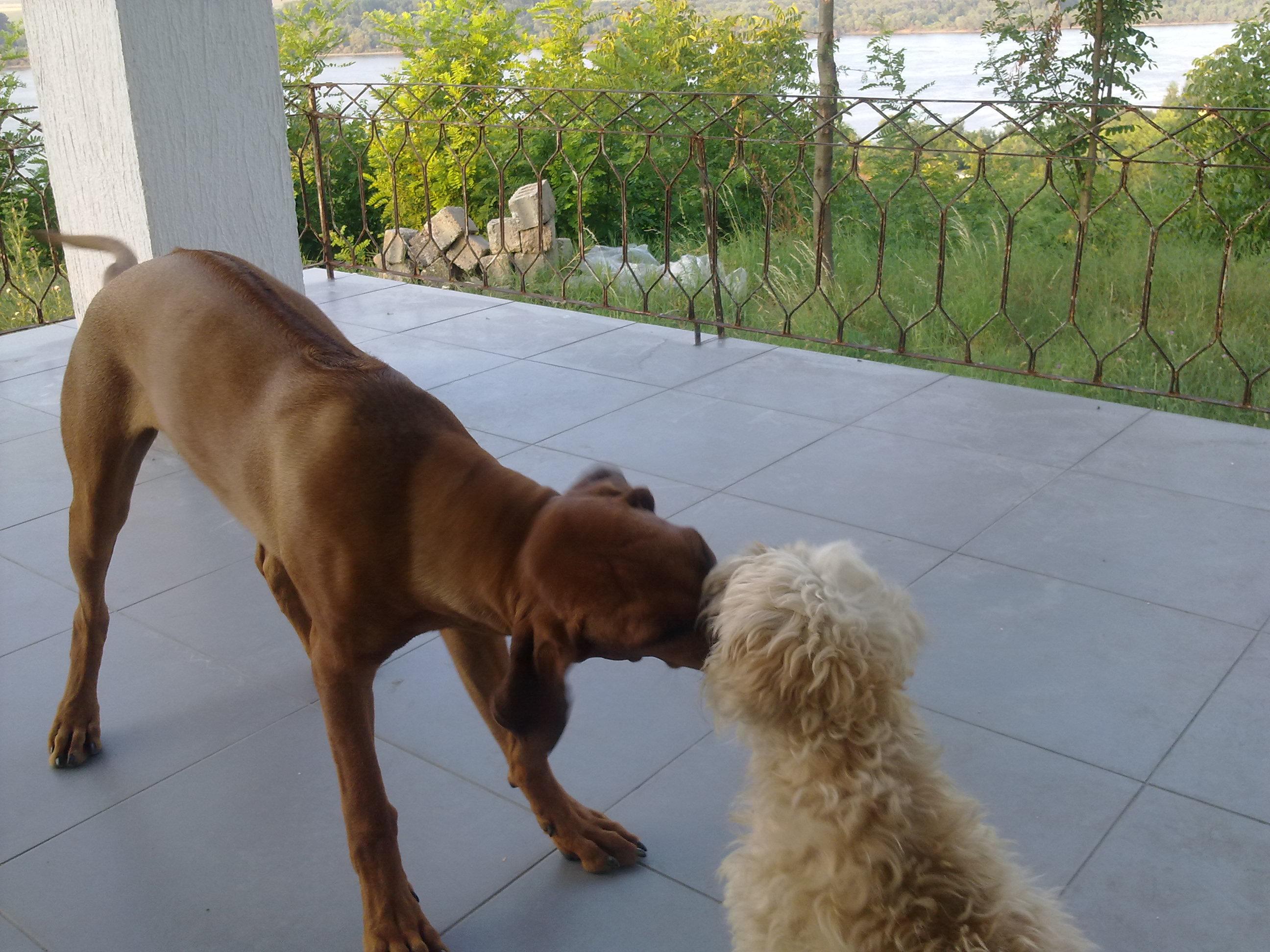 Hestia(5months) & Fleka