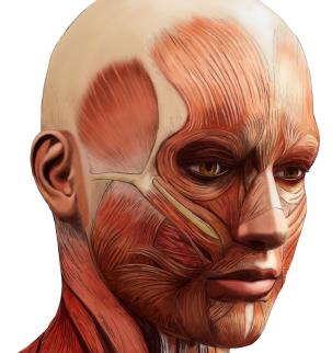 Ilustración científica anatómica