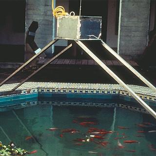 Cage n Fish 1999