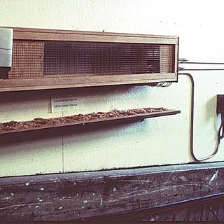 Reverse Skinner Box 1998