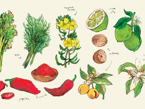 Illustrations for Diva Casa