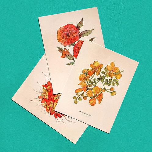 Floral Postcards: Individual