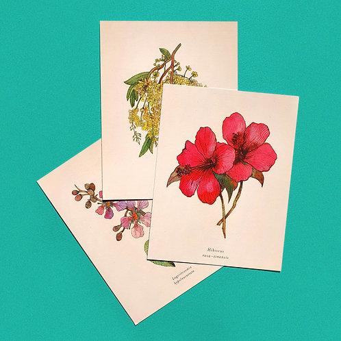 Floral Postcards: 6 Pack