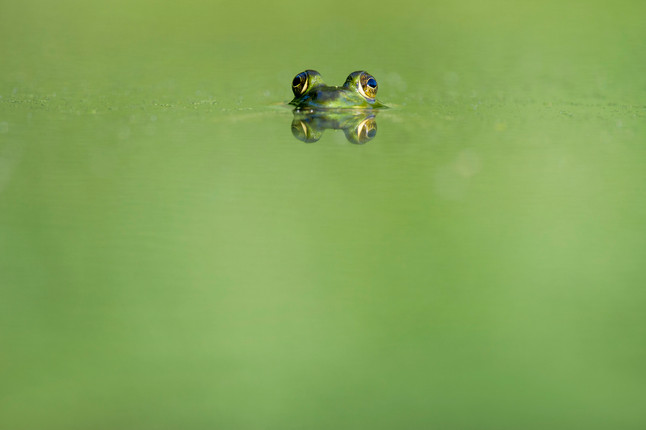 Kiss more frogs! | Lessons from Adam Grant's Originals | #VUHRDOneBook