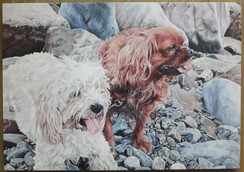 Two dogs on the rocks