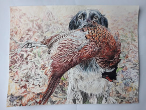 Dog, pheasant and leaves