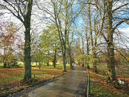 Bluesky's National Tree Map Helps London Council Clear Up Fallen Leaves