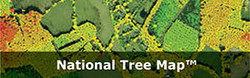 National Tree Map