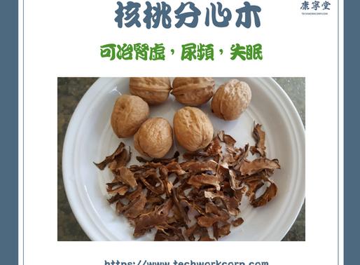 核桃分心木   Walnut Inside Shell