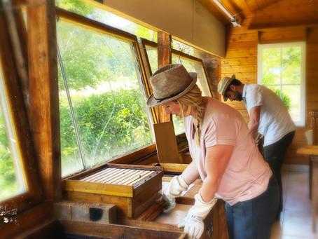 #Hope- Ein Plädoyer für die Bienen