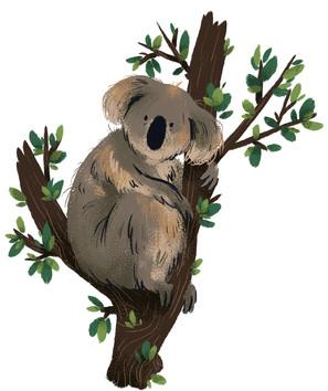 063_koalas.jpg