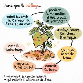 AudreyLainé_Permaculture_Paillage_04.jpg
