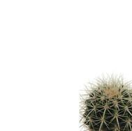 Cactus Template 2