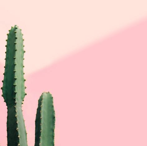 Cactus Template