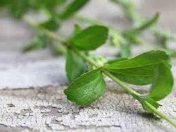 Stevia Rebaudiana, Natural Sweetener