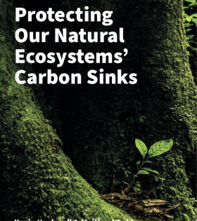It's time to protect our Natural Ecosystem Carbon Sinks