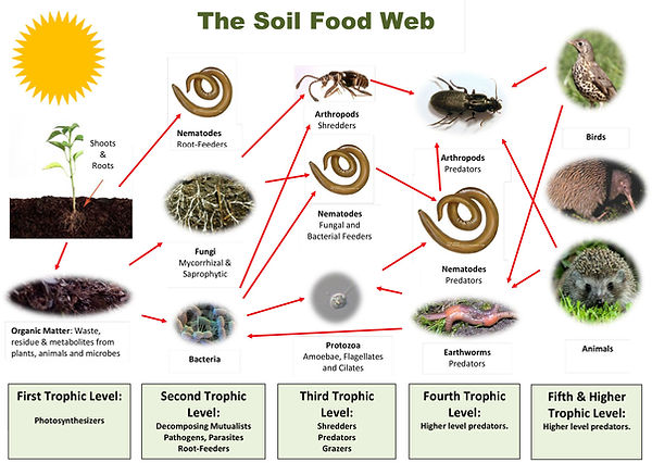 The-soil-food-web.jpg