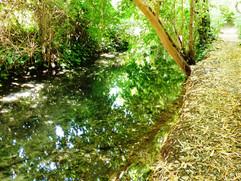 canal des Moulins (19).JPG