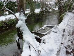 canal des Moulins (15).JPG