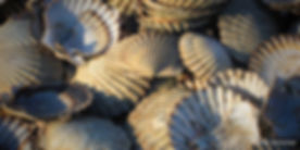 shells_garth_grimmer.jpg