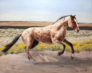 'Bay Roan Mustang'