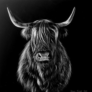 'Highland Cow From Front