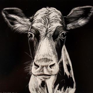 'Googly Holsein Calf'