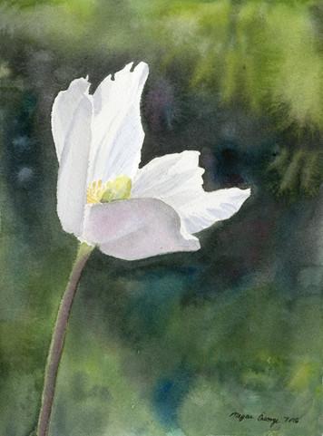 'White Anemone'