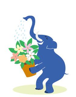 津田蘭子 Blue Elephant