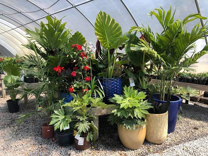 plants in perrenial greenhouse.jpg
