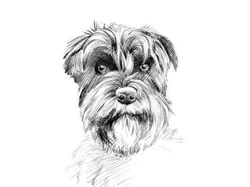 START your A3 pencil pet portrait