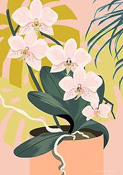 Orchid web.jpg