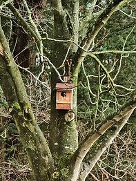Vogelnest im Resort Baumgeflüster